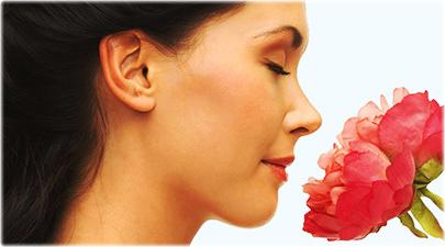 smell flower